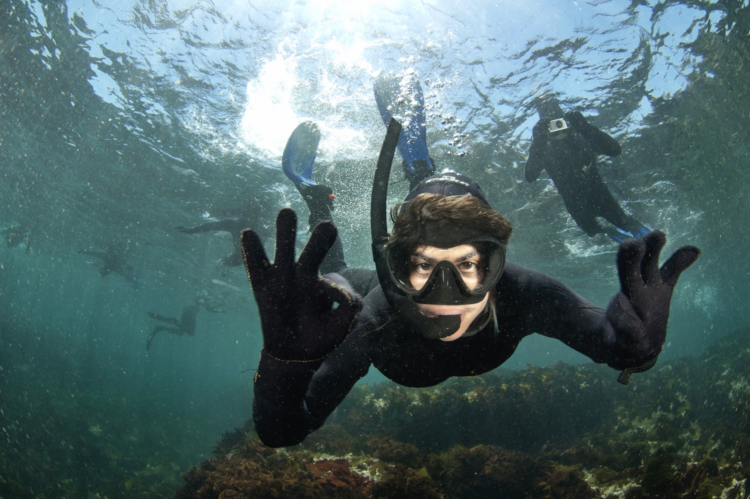 Snorkelling with seals (2)