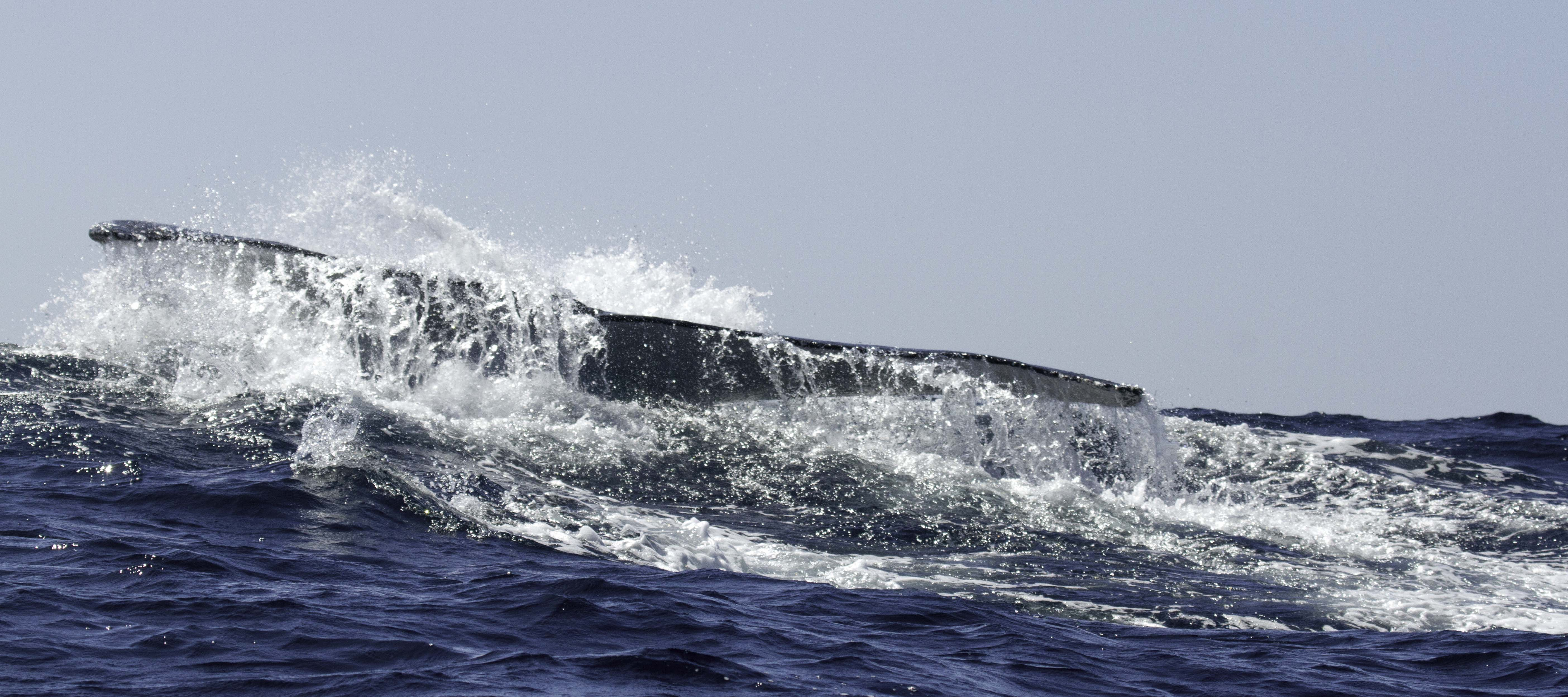 whale watching tail
