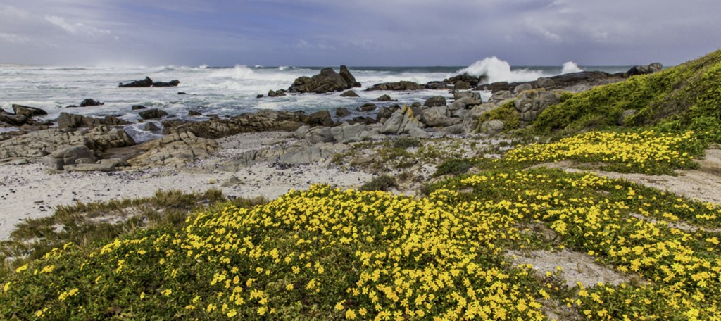 West Coast National Park Flower Season Coast South Africa