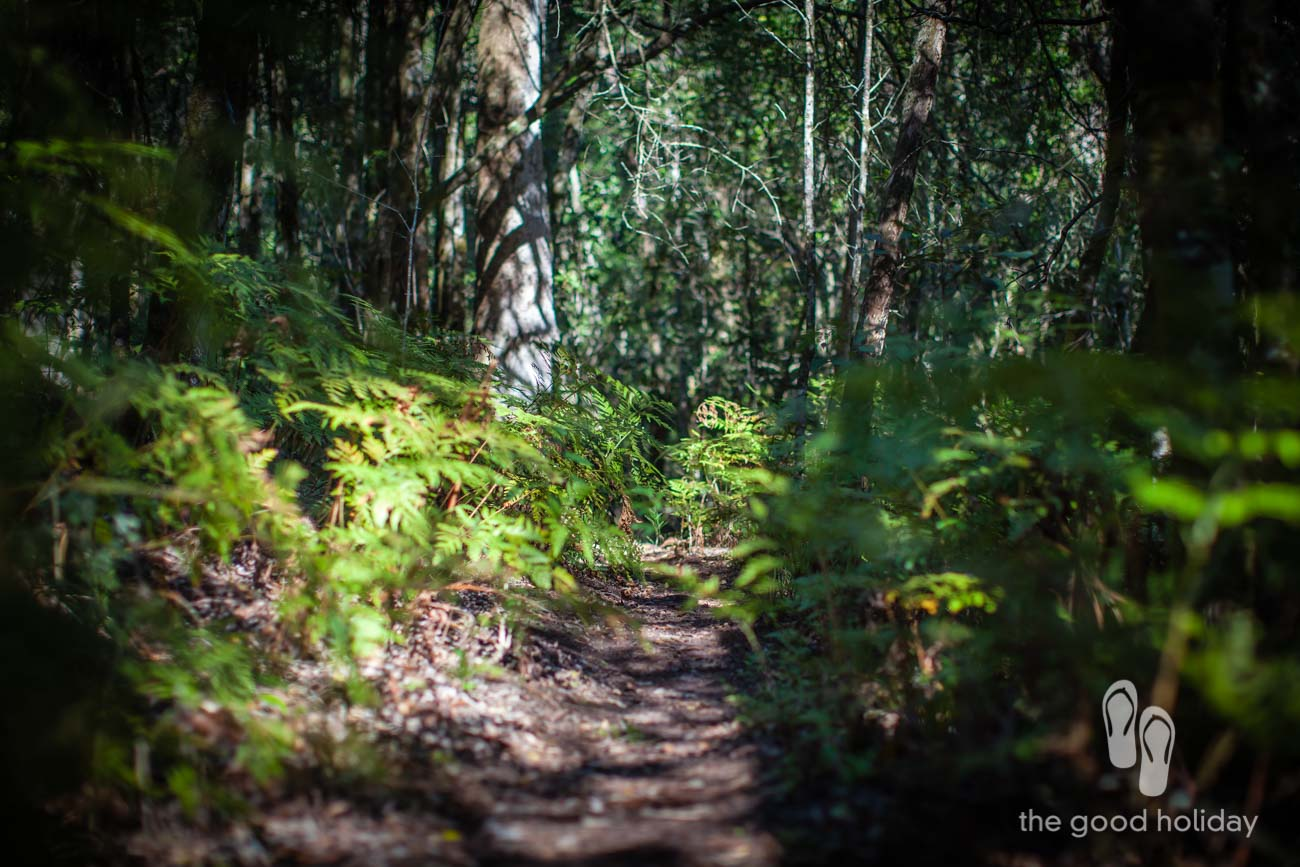 Knysna Forest Trail Footpath