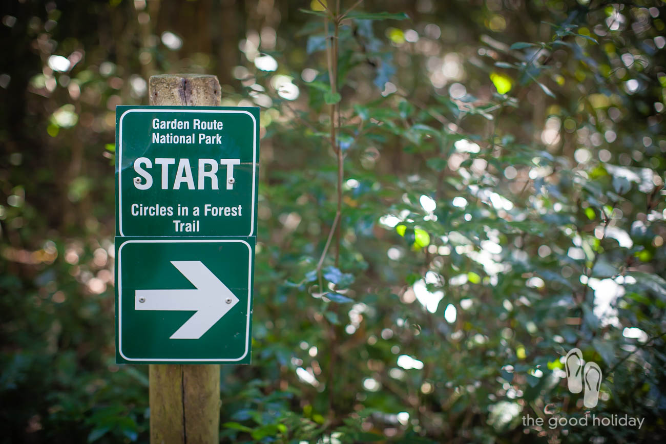 circles in a Forest Trail Knysna