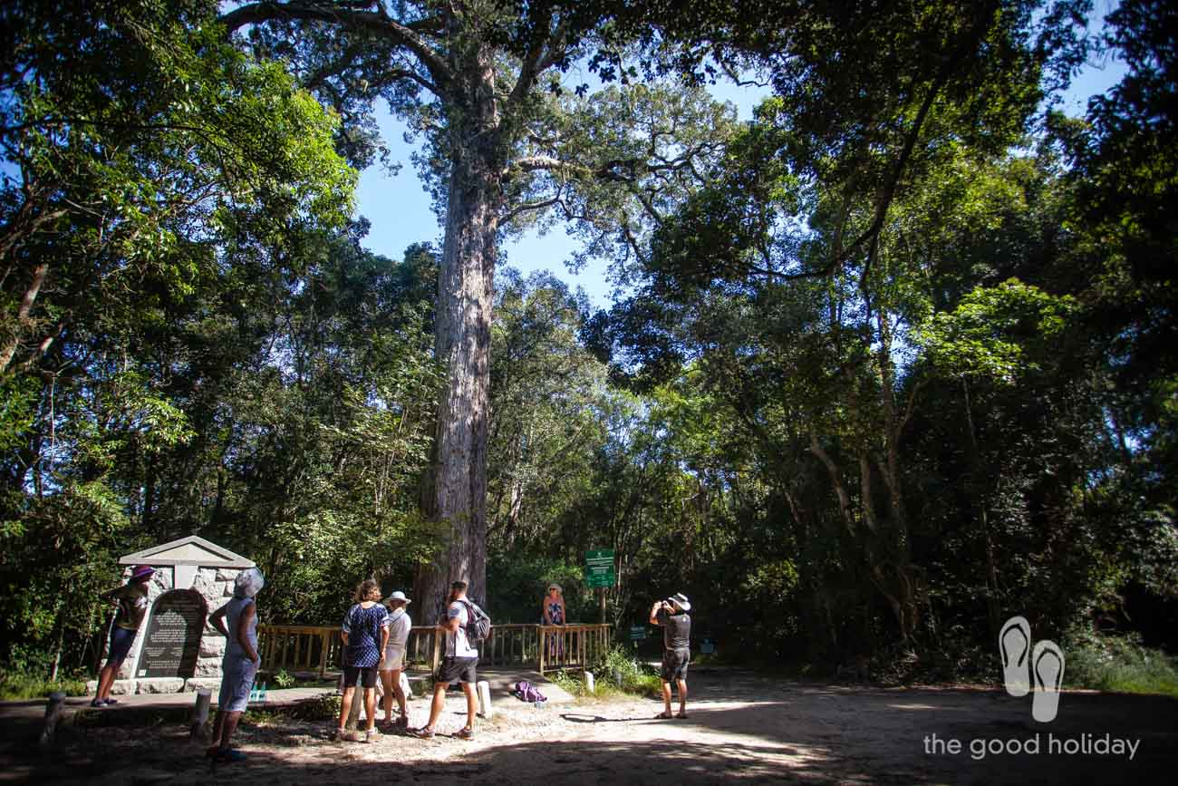 dalene Matthee Big Tree Knysna Memorial