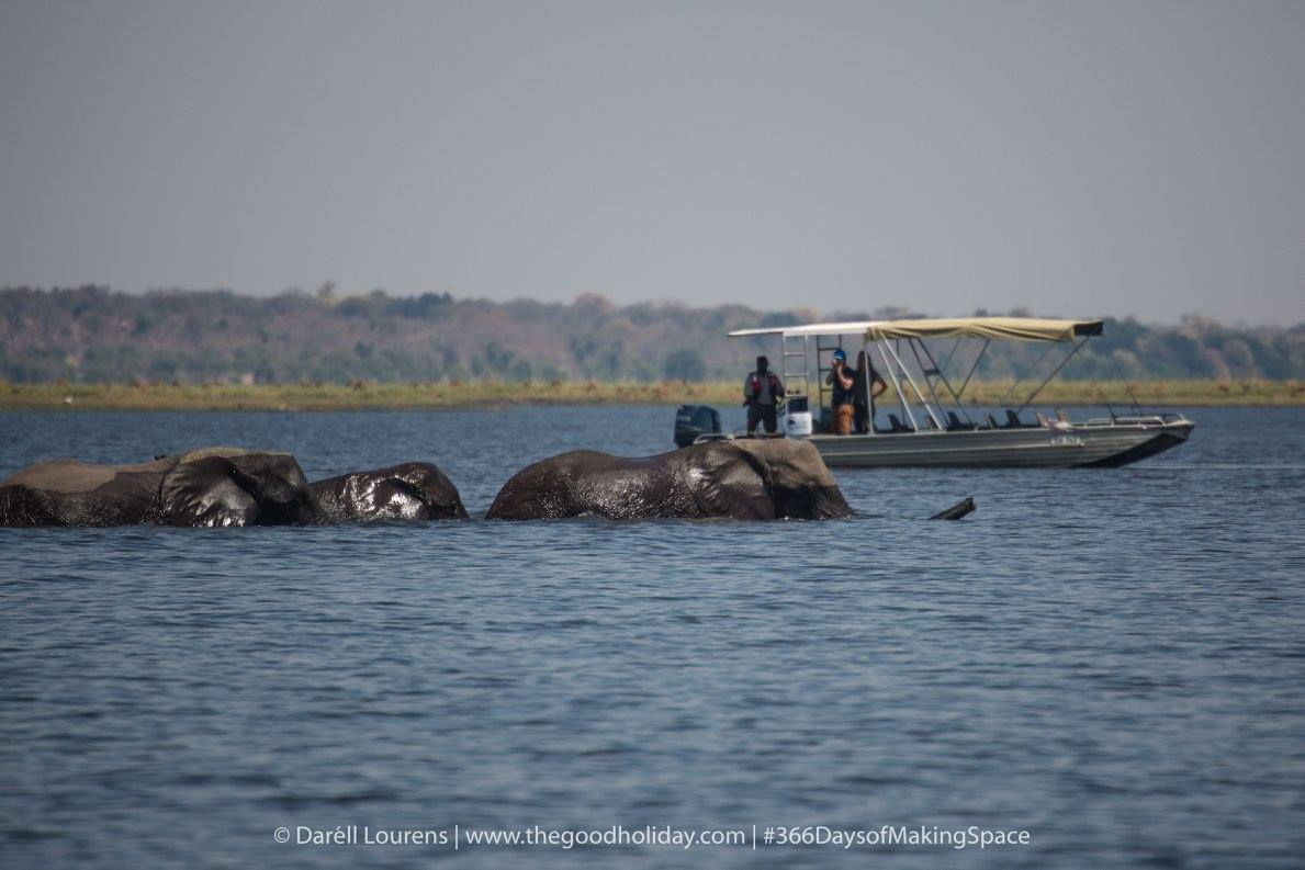 Chobe River Safari Elephants Swimming
